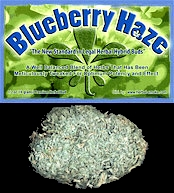 Blueberry Haze Hybrid Legal Weed